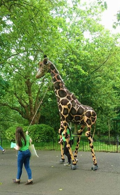 Giraffe puppet made for the West End Parade 2017. 3.5m tall, it was used for the parade and then bought by the National Puppetry Archive for the animal puppetry exhibition. Designed and made by Leah Kurzepa. Photo by C. Watts.